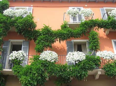 terrazzo fiorito tutto l anno piante per avere un balcone fiorito tutto l anno cerca