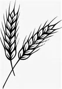 wheat plant worksheet kindergarten worksheet guide pictures clip art drawing coloring