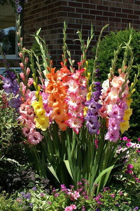 26 Best Images About Garden Flower Bulbs On Pinterest Garden Flower Types