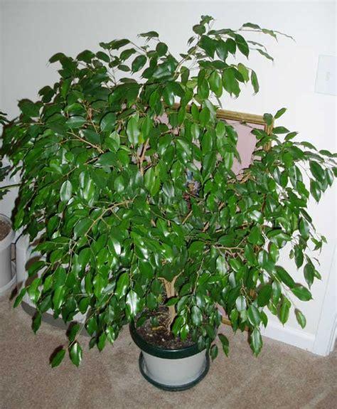 plantas de interior  benefician la salud