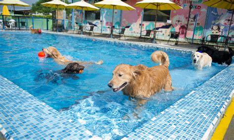Backyard Pools For Dogs Petworld Resort Lovin Your Pet Like You Do Petworld