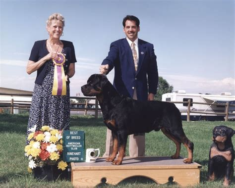rottweiler specialty shows duke photos