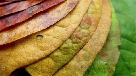 the chemicals that cause leaves to change color in fall