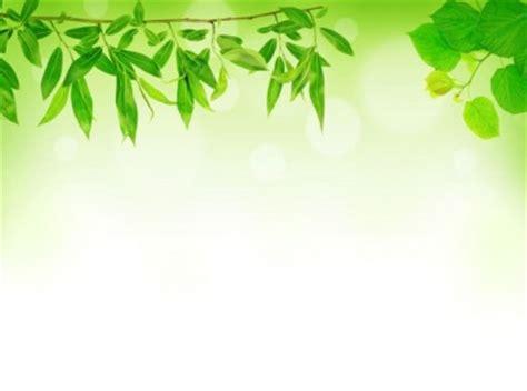 wallpaper daun hijau hd gambar hd daun hijau latar belakang hijau gratis foto