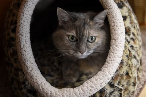 where do newborn kittens go to the bathroom find your next four legged fur baby at one of these jeffco