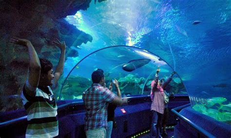 Lu Tanning Aquarium aquaria klcc www imgkid the image kid has it