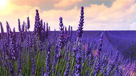 taman bunga  cantik  dunia tentik