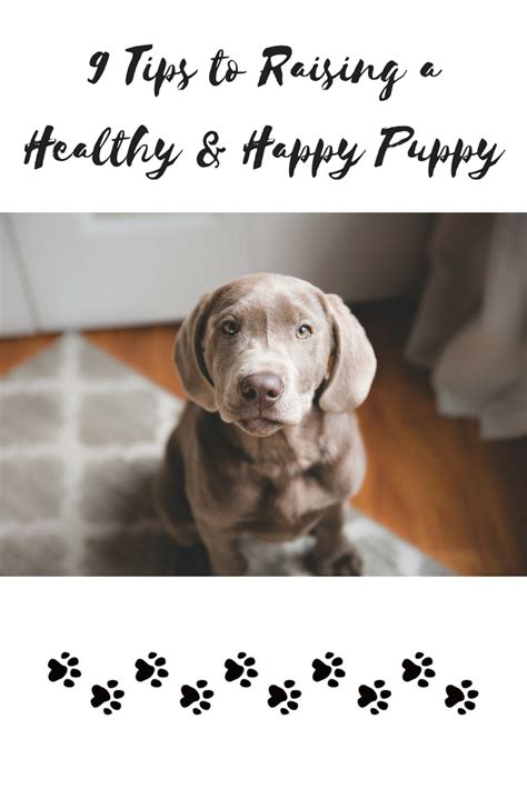 9 Tips On Raising by 9 Tips To Raising A Healthy Happy Puppy Obsessed By Portia