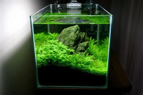cube aquarium aquascape cube garden plantedaquarium plantedtank planted