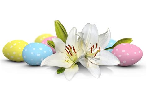 5 ways to save your easter lily williamson source