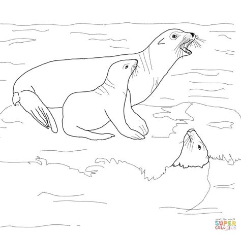 sea lion coloring pages printable california sea lion with its baby coloring online super