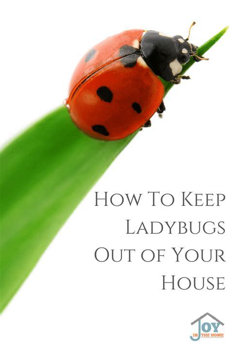how to keep ladybugs out of your house in the home