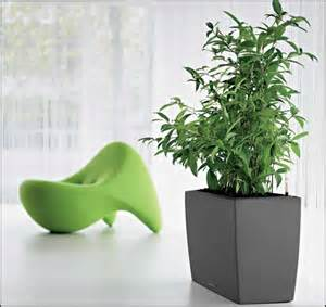 Large house plants large indoor plants low lights