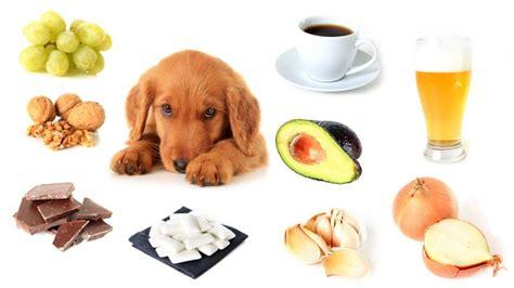 alimentos mascotas 9 alimentos t 243 xicos que debes evitar dar a tu mascota