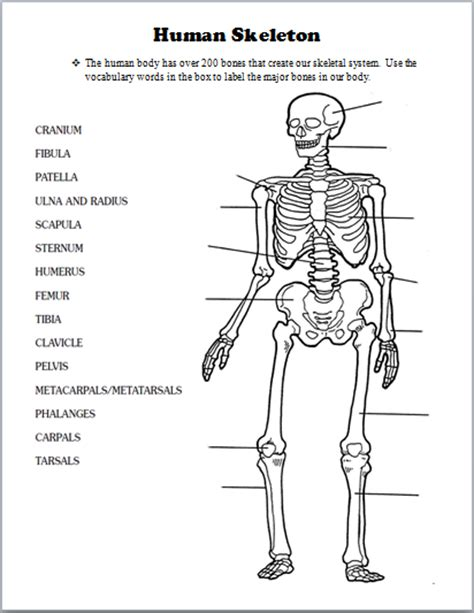 printable label the skeleton skeletal system human body