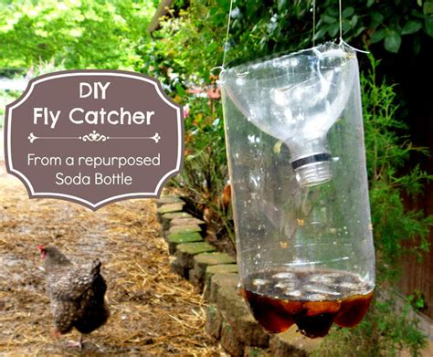 Get Rid Of Mosquitoes In Backyard Pest Control Tips To Keep Away Pest In The Summer Season