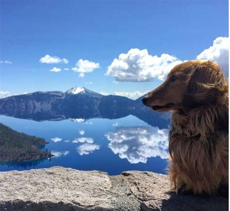 parks that allow dogs a owner s guide to visiting national parks mnn nature network