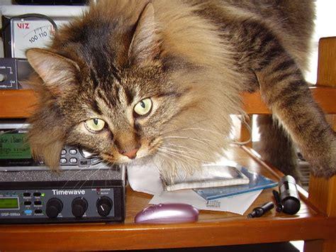 Universal Kitten taz cat bio