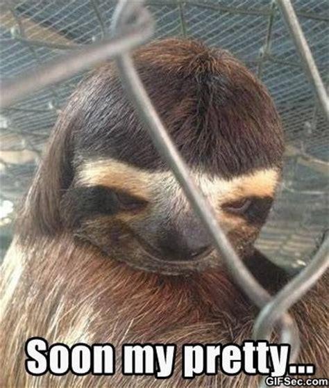 Creepy Sloth Meme - creepy sloth jpg