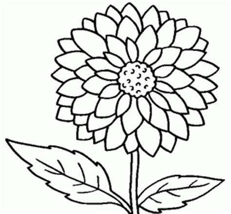 imagenes de flores sin pintar flores para colorear biopedia