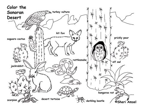 coloring pages of animals in their habitats grassland animals coloring pages 1000 images about
