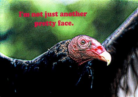 Backyard Birds Matthews Nc Vultures Backyard Birds The Bird Food Store Matthews Nc