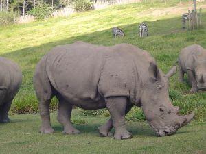imagenes de animales salvajes gratis animales salvajes 2 descargar fotos gratis