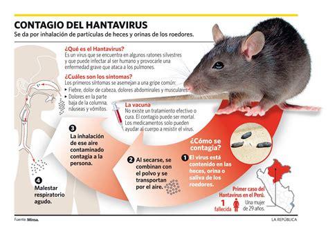 imagenes de vectores que transmiten enfermedades ems solutions international marca registrada hanta virus