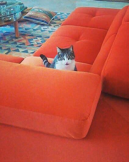 divano gatto tessuto resistente ai gatti archivi lineatre arredamenti