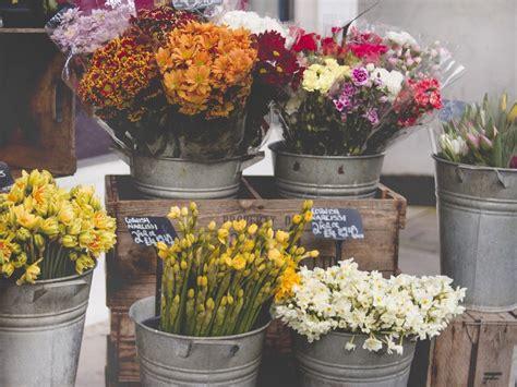 macam macam tanaman  cocok  rumah minimalis