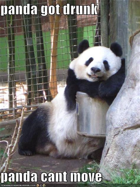 Drunk Panda Meme - drunk panda quotes