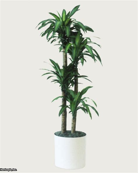 best plants for dark rooms q a northern light for indoor trees hgtv