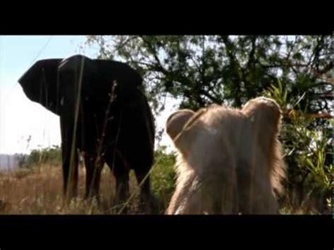 white lion film youtube white lion movie part 4 youtube