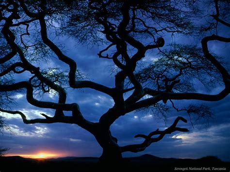 cool trees cool wallpaper computer evening trees