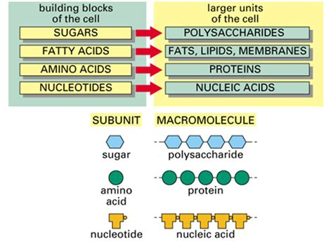 carbohydrates and lipids compare and contrast carbohydrates compare and contrast the roles of