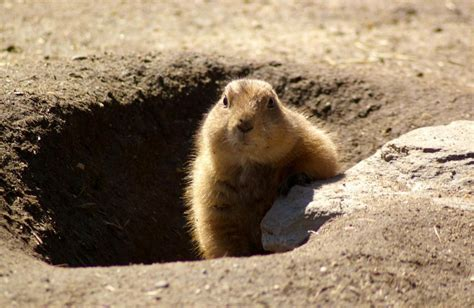 groundhog day pics don t repeat your investment mistakes wealth management