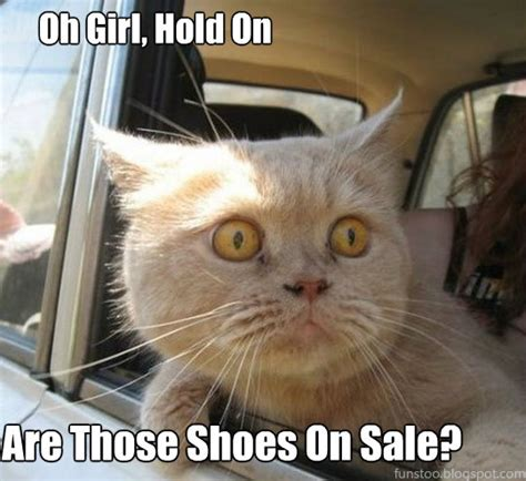 funny cat in shoes august 2013 to breathe is to write
