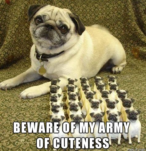 Pug Memes - commander pug readies his forces pug meme funny cute