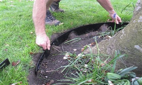 Landscape Edging Around Tree Roots Tree Rings And Mulching Treeability Nick Winram Mulch