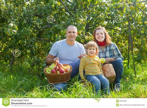 happy family garden happy family with apples harvest in garden stock image