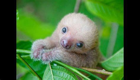 imagenes de hermosos osos estas fotos demuestran lo adorables que son los osos