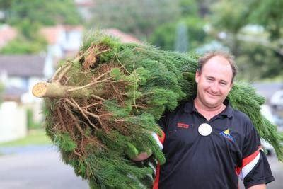 real christmas trees on sale today newcastle herald