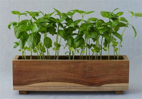Indoor Window Sill Planter Box by The Plant Page 12 The Sill