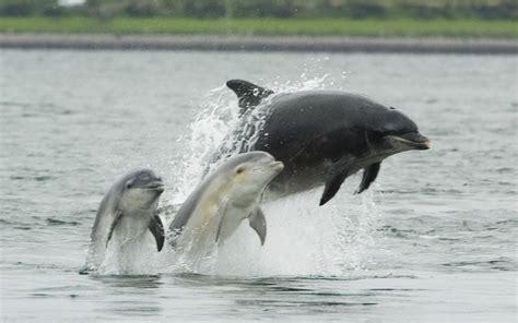 Bottlenose Dolphin | Animal Wildlife