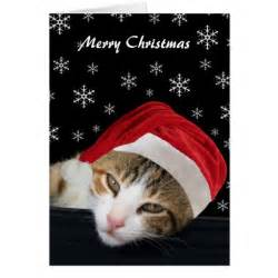 cute cat christmas cards zazzle