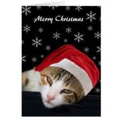 cute cat christmas cards zazzle