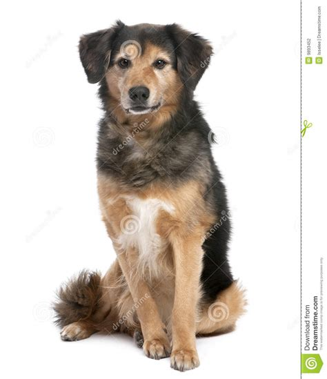 Black And Brown Brown And Black Mixed Breed Stock Photography Image