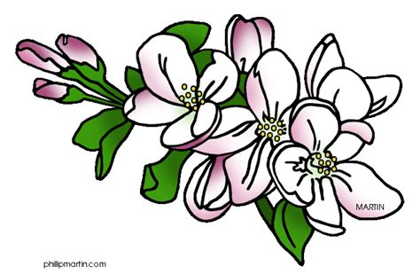 Apple Blossom State Flower - apple blossom clip art cliparts co