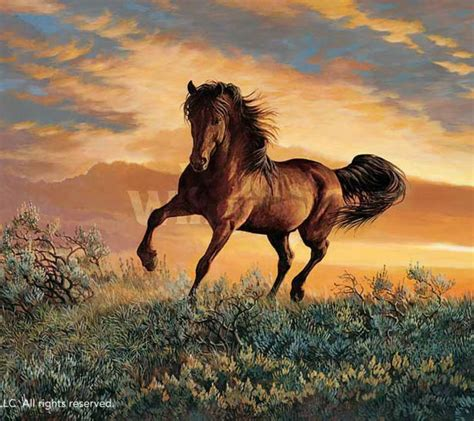 pictures of mustang horses 17 best images about horses on mustang horses