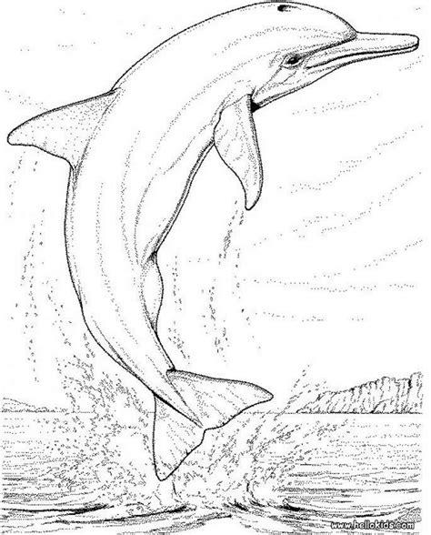 large dolphin coloring page dolphin coloring pages big dolphin